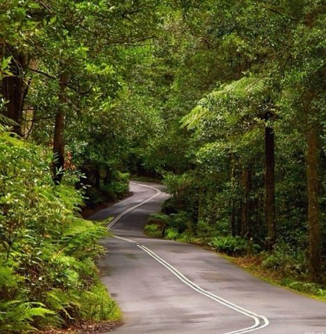 megalong Valley Road, Blue Mountains, NSW, Australia
