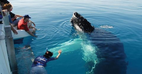 hervey bay blue dolphin tours