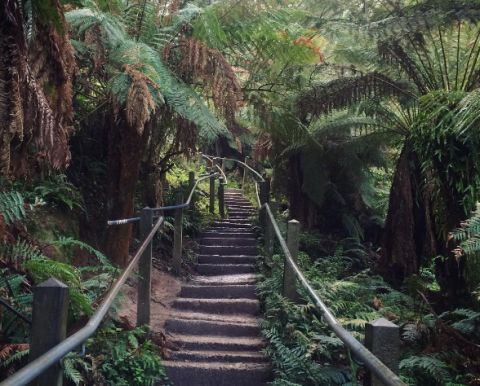 1000 steps, Dandenong Ranges,  elliesalmon3