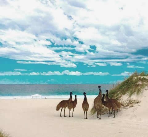 emu Jurien Bay