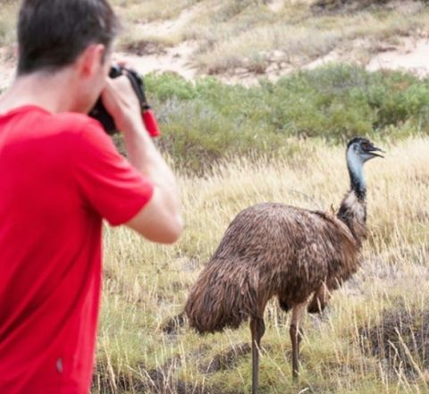 Emu, Cape Range National Park