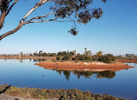 Whyalla wetlands